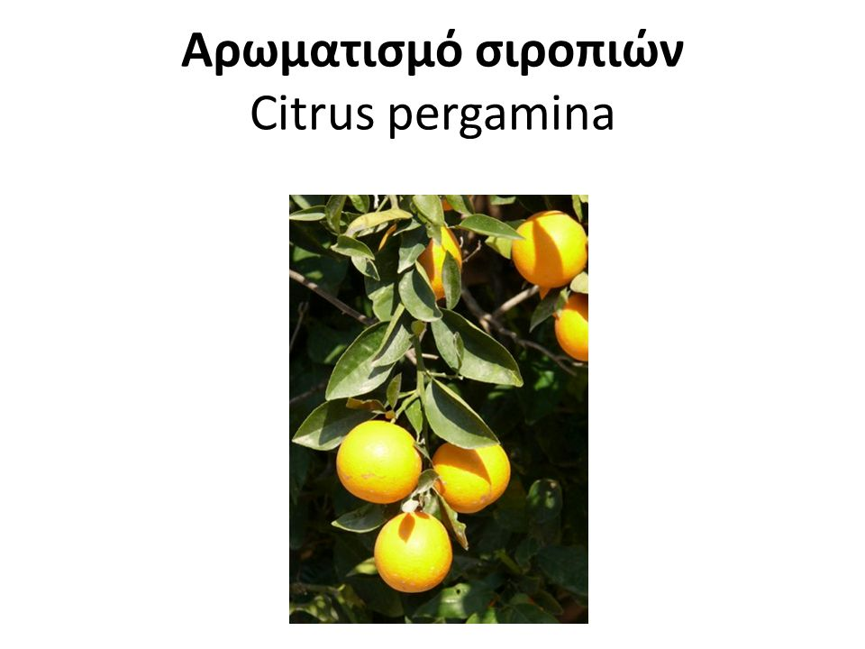 Αρωματισμό σιροπιών Citrus pergamina
