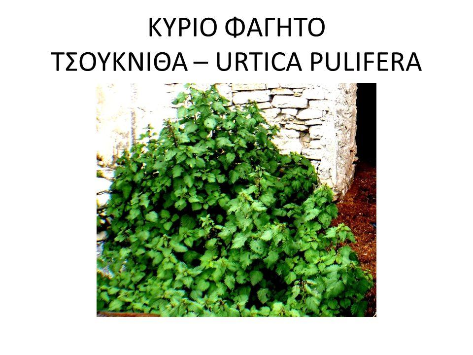 ΚΥΡΙΟ ΦΑΓΗΤΟ ΤΣΟΥΚΝΙΘΑ – URTICA PULIFERA