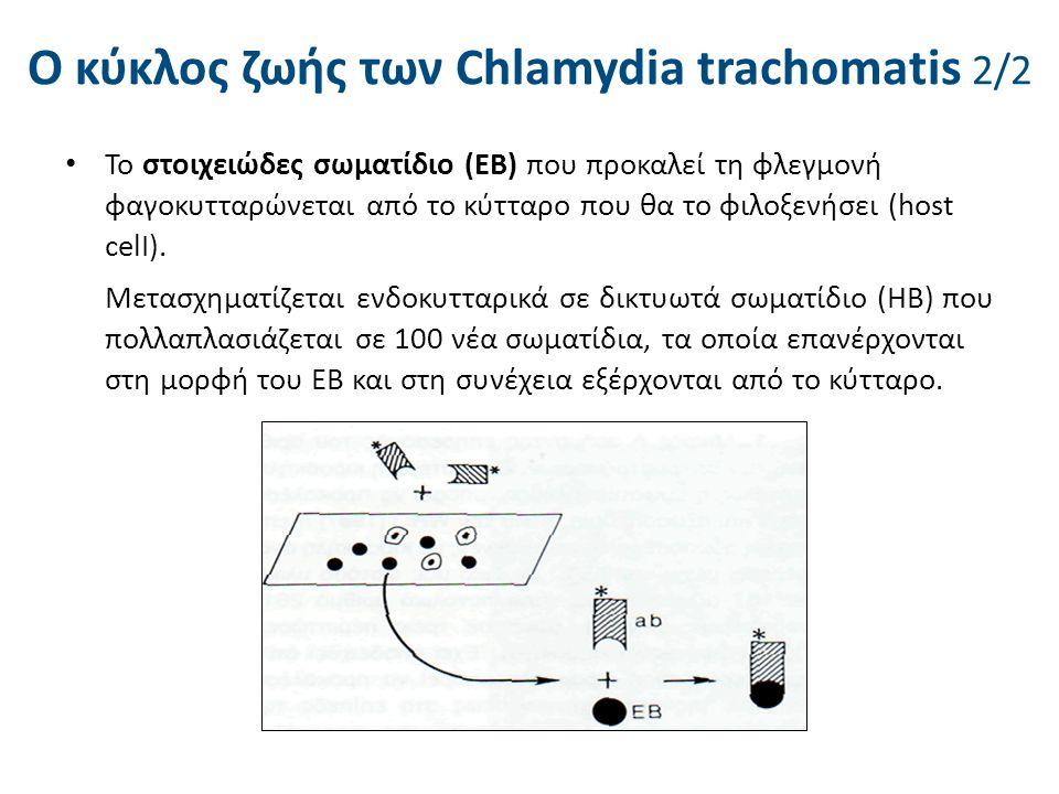 Ο κύκλος ζωής των Chlamydia trachomatis 2/2 Το στοιχειώδες σωματίδιο (ΕΒ) που προκαλεί τη φλεγμονή φαγοκυτταρώνεται από το κύτταρο που θα το φιλοξενήσ