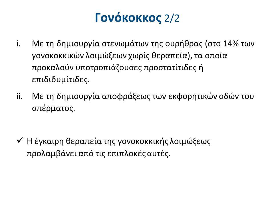 Γονόκοκκος 2/2 i.Με τη δημιουργία στενωμάτων της ουρήθρας (στο 14% των γονοκοκκικών λοιμώξεων χωρίς θεραπεία), τα οποία προκαλούν υποτροπιάζουσες προσ
