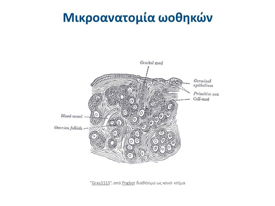 """Μικροανατομία ωοθηκών """"Gray1113"""", από Pngbot διαθέσιμο ως κοινό κτήμαGray1113Pngbot"""