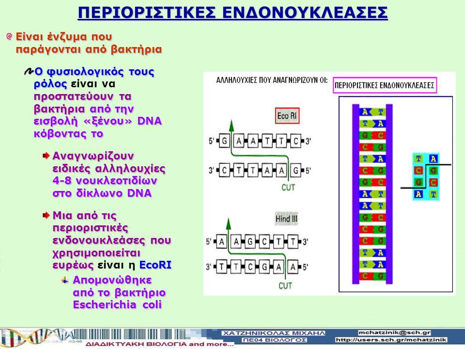 ΠΕΡΙΟΡΙΣΤΙΚΕΣ ΕΝΔΟΝΟΥΚΛΕΑΣΕΣ Είναι ένζυμα που παράγονται από βακτήρια Ο φυσιολογικός τους ρόλος προστατεύουν τα βακτήριααπό την εισβολή «ξένου» DNA κόβοντας το Ο φυσιολογικός τους ρόλος είναι να προστατεύουν τα βακτήρια από την εισβολή «ξένου» DNA κόβοντας το Αναγνωρίζουν ειδικές αλληλουχίες 4-8 νουκλεοτιδίων στο δίκλωνο DNA Μια από τις περιοριστικές ενδονουκλεάσες που χρησιμοποιείται ευρέως ΕcoRI Μια από τις περιοριστικές ενδονουκλεάσες που χρησιμοποιείται ευρέως είναι η ΕcoRI Απομονώθηκε από το βακτήριο Escherichia coli