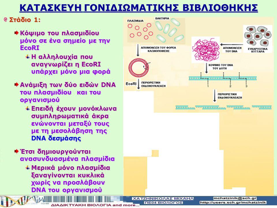 Στάδιο 1: Κατασκευή των ανασυνδυασμένων DNA με φορέα κλωνοποίησης το πλασμίδιο ενός βακτηρίου Απομόνωσητου ολικού DNA του οργανισμού δότη Απομόνωση το