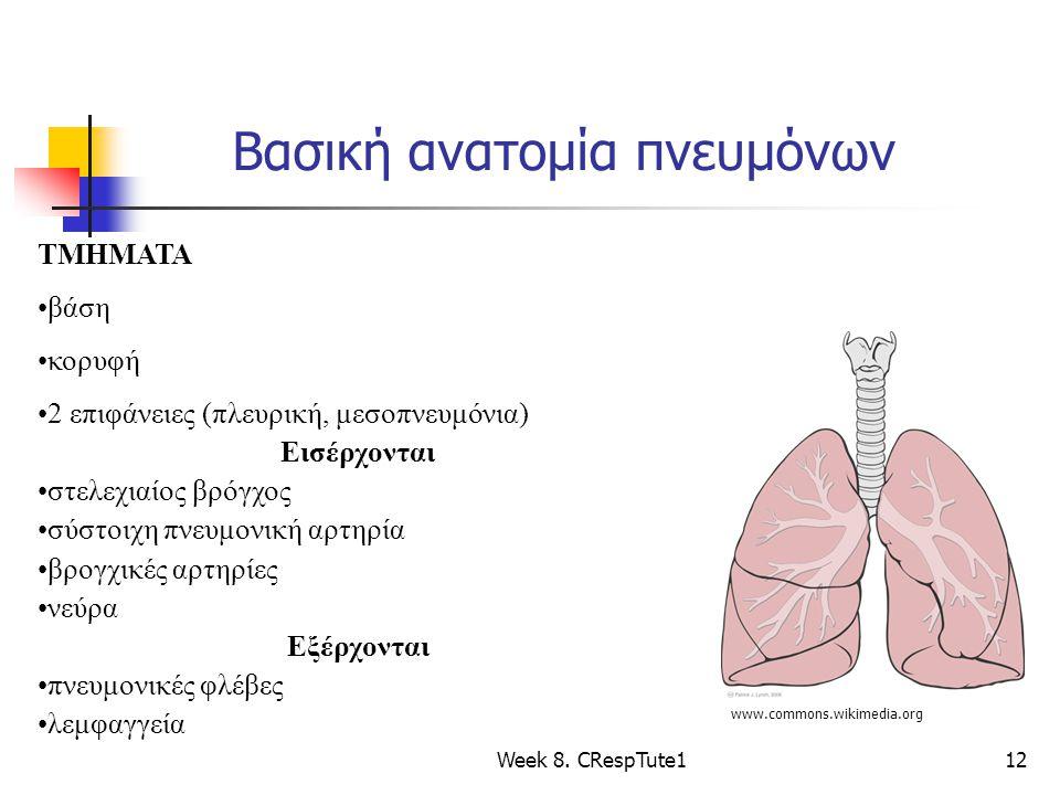 Βασική ανατομία πνευμόνων Week 8. CRespTute112 www.commons.wikimedia.org ΤΜΗΜΑΤΑ βάση κορυφή 2 επιφάνειες (πλευρική, μεσοπνευμόνια) Εισέρχονται στελεχ