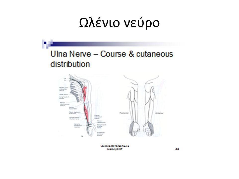 Ωλένιο νεύρο