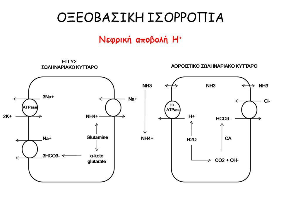 pH = -log [H+] Εξίσωση Henderson-Hasselbach: pH = 6,10 + log Αλλαγή στο εξωκυττάριο pH: 1.Φόρτιση με οξύ ή βάση μεγαλύτερη από ικανότητα αποβολής τους 2.Διαταραχή αναπνευστικής λειτουργίας 3.Διαταραχή νεφρικής λειτουργίας [HCO 3 - ] 0,03 x PCO 2