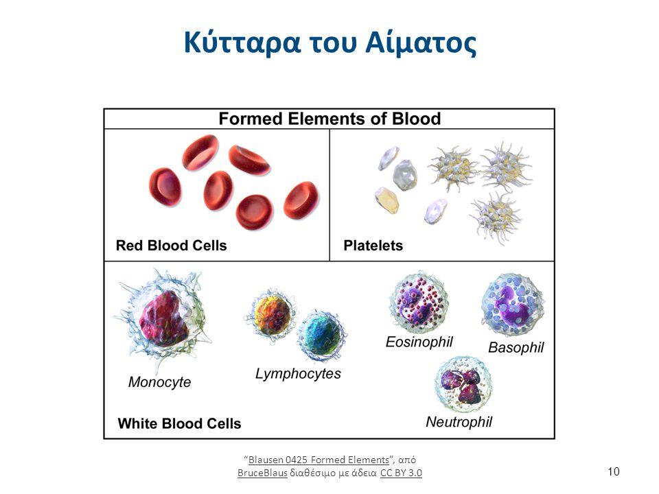 """Κύτταρα του Αίματος """"Blausen 0425 Formed Elements"""", από BruceBlaus διαθέσιμο με άδεια CC BY 3.0Blausen 0425 Formed Elements BruceBlausCC BY 3.0 10"""