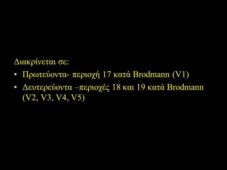 Οπτικός φλοιός Διακρίνεται σε: Πρωτεύοντα- περιοχή 17 κατά Brodmann (V1) Δευτερεύοντα –περιοχές 18 και 19 κατά Brodmann (V2, V3, V4, V5)