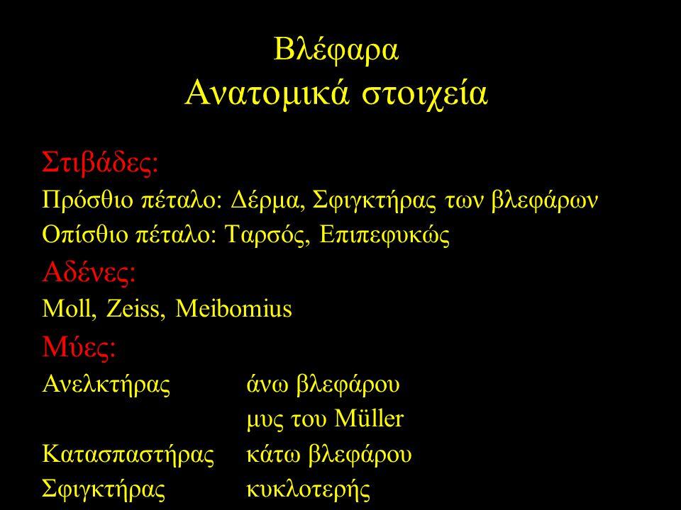 Βλέφαρα Ανατομικά στοιχεία Στιβάδες: Πρόσθιο πέταλο: Δέρμα, Σφιγκτήρας των βλεφάρων Οπίσθιο πέταλο: Ταρσός, Επιπεφυκώς Αδένες: Moll, Zeiss, Meibomius
