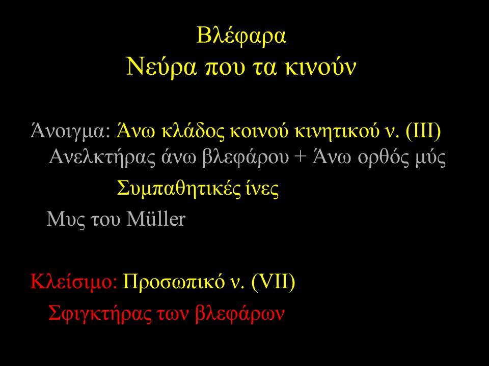 Άνοιγμα: Άνω κλάδος κοινού κινητικού ν. (ΙΙΙ) Ανελκτήρας άνω βλεφάρου + Άνω ορθός μύς Συμπαθητικές ίνες Μυς του Müller Κλείσιμο: Προσωπικό ν. (VII) Σφ