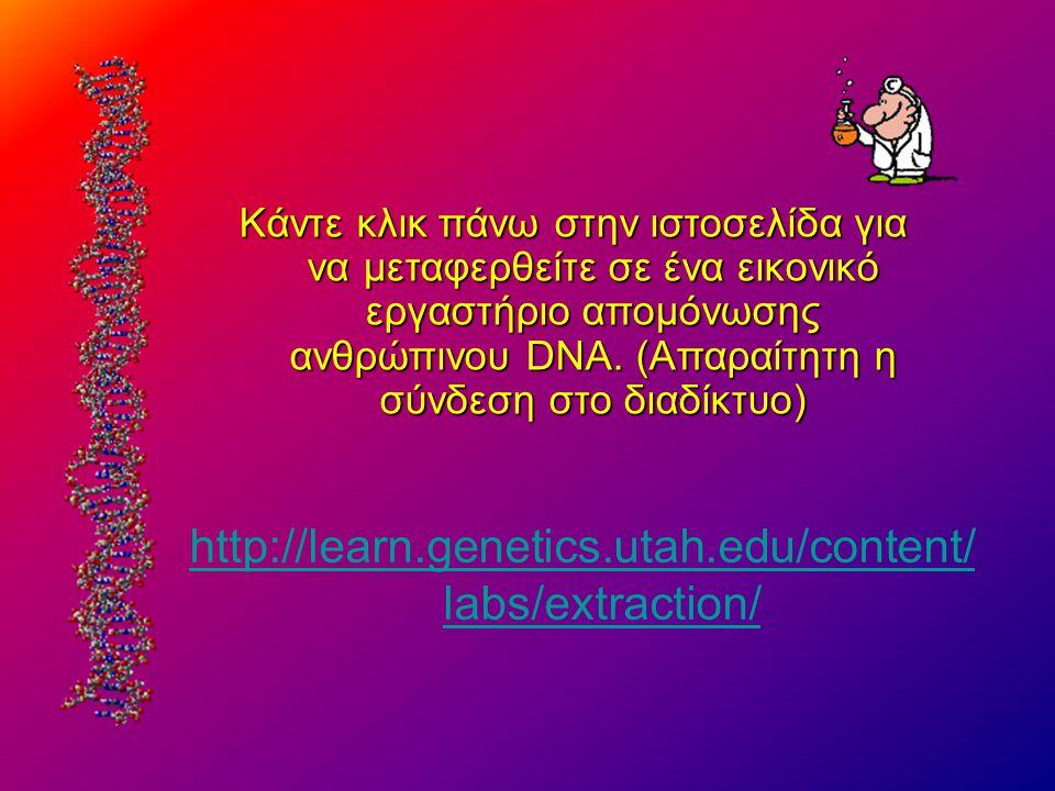 http://learn.genetics.utah.edu/content/ labs/extraction/ Kάντε κλικ πάνω στην ιστοσελίδα για να μεταφερθείτε σε ένα εικονικό εργαστήριο απομόνωσης ανθ