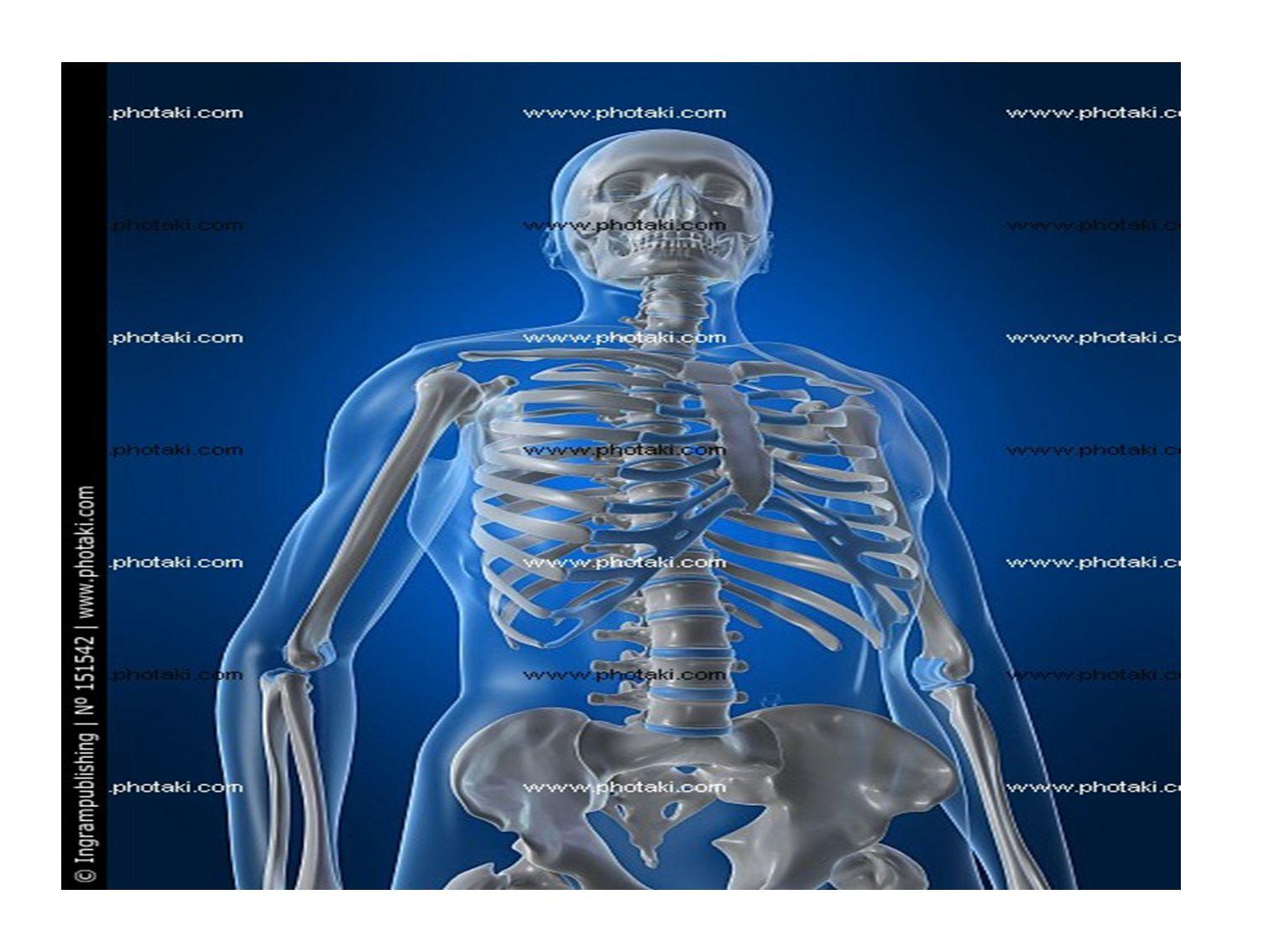 ΣΚΕΛΕΤΙΚΟ ΣΥΣΤΗΜΑ Ο σκελετός αποτελείται από 206 οστά και χωρίζεται: Στο σκελετό του κορμού και τον σκελετό των άκρων.