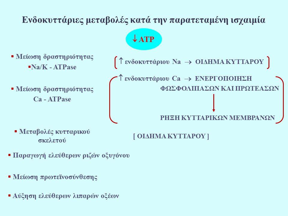 Ενδοκυττάριες μεταβολές κατά την παρατεταμένη ισχαιμία  Μείωση δραστηριότητας  Na/K - ATPase  ενδοκυττάριου Na  ΟΙΔΗΜΑ ΚΥΤΤΑΡΟΥ  Μείωση δραστηριότητας Ca - ATPase  ενδοκυττάριου Ca  ΕΝΕΡΓΟΠΟΙΗΣΗ ΦΩΣΦΟΛΙΠΑΣΩΝ ΚΑΙ ΠΡΩΤΕΑΣΩΝ ΡΗΞΗ ΚΥΤΤΑΡΙΚΩΝ ΜΕΜΒΡΑΝΩΝ  Μεταβολές κυτταρικού σκελετού [ ΟΙΔΗΜΑ ΚΥΤΤΑΡΟΥ ]  Παραγωγή ελεύθερων ριζών οξυγόνου  Μείωση πρωτεϊνοσύνθεσης  Αύξηση ελεύθερων λιπαρών οξέων  ATP