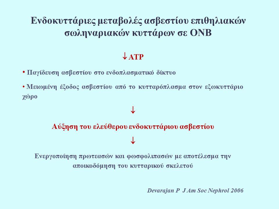 Ενδοκυττάριες μεταβολές ασβεστίου επιθηλιακών σωληναριακών κυττάρων σε ΟΝΒ  ATP Παγίδευση ασβεστίου στο ενδοπλασματικό δίκτυο Μειωμένη έξοδος ασβεστίου από το κυτταρόπλασμα στον εξωκυττάριο χώρο  Αύξηση του ελεύθερου ενδοκυττάριου ασβεστίου  Ενεργοποίηση πρωτεασών και φωσφολιπασών με αποτέλεσμα την αποικοδόμηση του κυτταρικού σκελετού Devarajan P J Am Soc Nephrol 2006