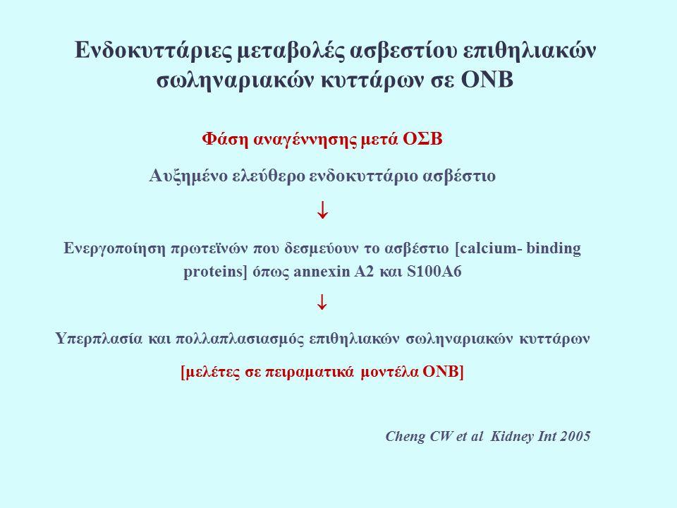 Ενδοκυττάριες μεταβολές ασβεστίου επιθηλιακών σωληναριακών κυττάρων σε ΟΝΒ Φάση αναγέννησης μετά ΟΣΒ Αυξημένο ελεύθερο ενδοκυττάριο ασβέστιο  Ενεργοποίηση πρωτεϊνών που δεσμεύουν το ασβέστιο [calcium- binding proteins] όπως annexin A2 και S100A6  Υπερπλασία και πολλαπλασιασμός επιθηλιακών σωληναριακών κυττάρων [μελέτες σε πειραματικά μοντέλα ΟΝΒ] Cheng CW et al Kidney Int 2005