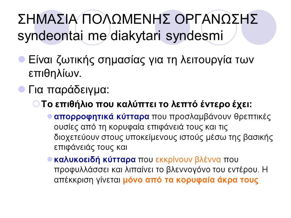 ΣΗΜΑΣΙΑ ΠΟΛΩΜΕΝΗΣ ΟΡΓΑΝΩΣΗΣ syndeontai me diakytari syndesmi Είναι ζωτικής σημασίας για τη λειτουργία των επιθηλίων. Για παράδειγμα:  Το επιθήλιο που