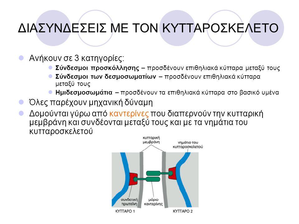 ΔΙΑΣΥΝΔΕΣΕΙΣ ΜΕ ΤΟΝ ΚΥΤΤΑΡΟΣΚΕΛΕΤΟ Ανήκουν σε 3 κατηγορίες: Σύνδεσμοι προσκόλλησης – προσδένουν επιθηλιακά κύτταρα μεταξύ τους Σύνδεσμοι των δεσμοσωμα