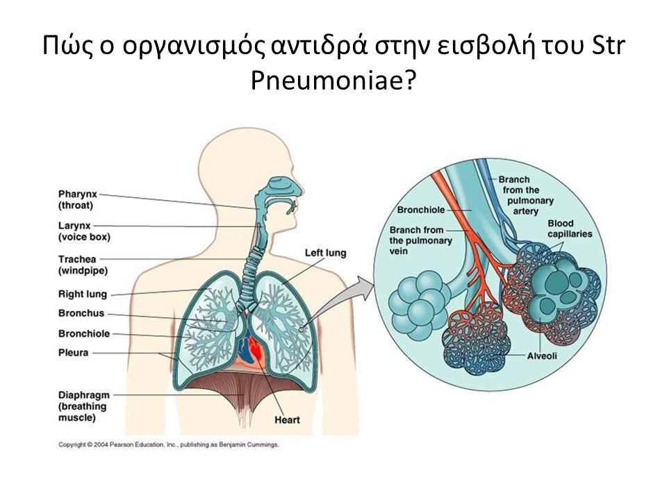 Πώς ο οργανισμός αντιδρά στην εισβολή του Str Pneumoniae?