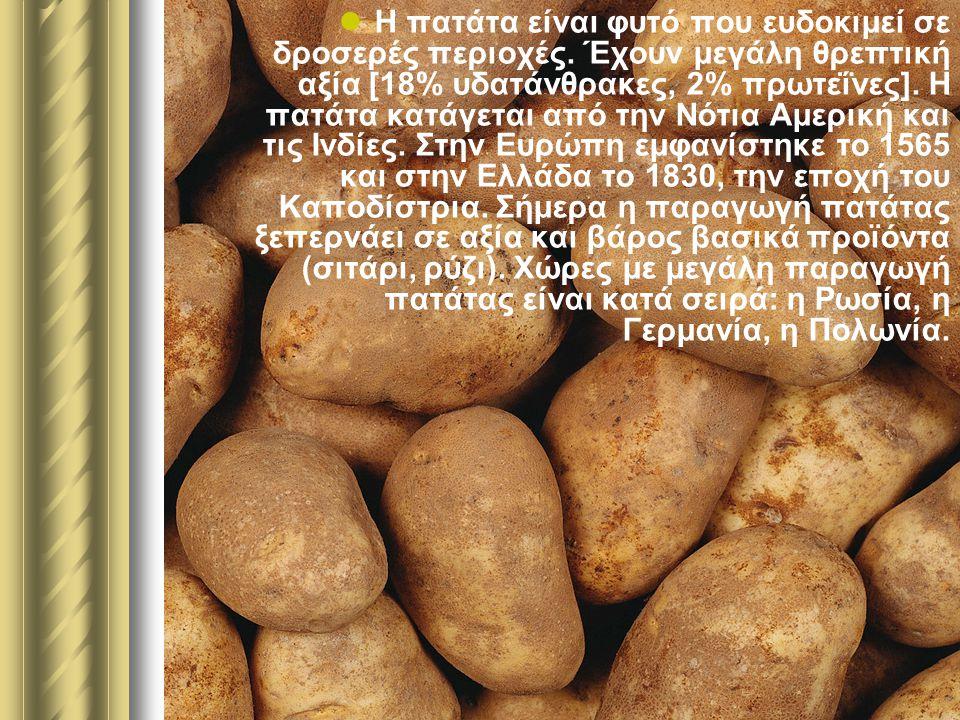 Η πατάτα είναι φυτό που ευδοκιμεί σε δροσερές περιοχές. Έχουν μεγάλη θρεπτική αξία [18% υδατάνθρακες, 2% πρωτεΐνες]. Η πατάτα κατάγεται από την Νότια