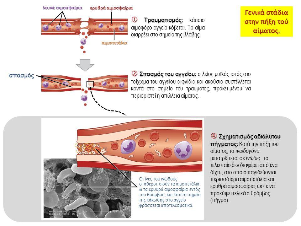 λευκά αιμοσφαίρια ερυθρά αιμοσφαίρια αιμοπετάλια  Τραυματισμός:  Τραυματισμός: κάποιο αιμοφόρο αγγείο κόβεται. Το αίμα διαρρέει στο σημείο της βλάβη