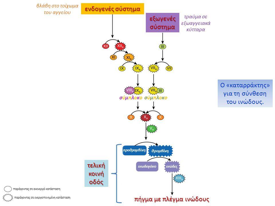 τραύμα σε εξωαγγειακά κύτταρα ενδογενές σύστημα βλάβη στο τοίχωμα του αγγείου σύμπλοκοσύμπλοκοσύμπλοκοσύμπλοκο εξωγενές σύστημα προθρομβίνη θρομβίνη ι