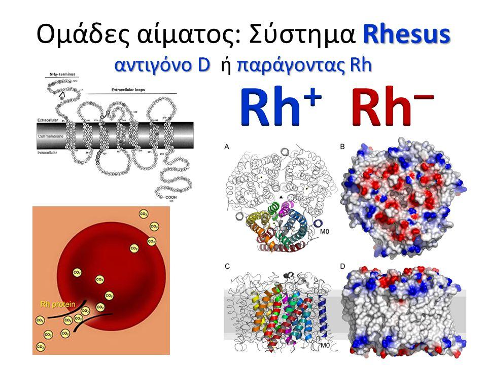 Rhesus Ομάδες αίματος: Σύστημα Rhesus αντιγόνο D παράγοντας Rh αντιγόνο D ή παράγοντας Rh