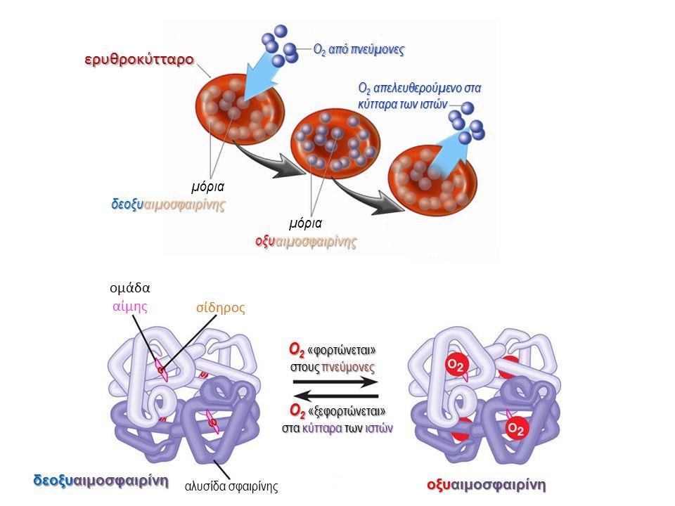 ερυθροκύτταρο ερυθροκύτταρο δεοξυαιμοσφαιρίνης μόρια δεοξυαιμοσφαιρίνης Ο 2 από πνεύμονες Ο 2 απελευθερούμενο στα κύτταρα των ιστών οξυαιμοσφαιρίνης μ