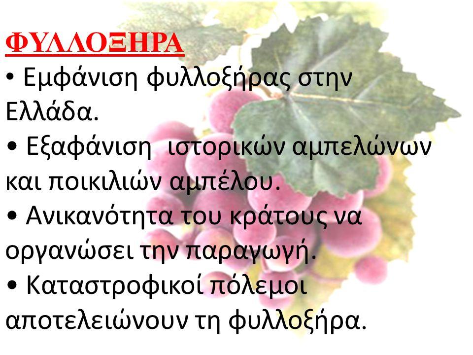 ΦΥΛΛΟΞΗΡΑ Εμφάνιση φυλλοξήρας στην Ελλάδα. Εξαφάνιση ιστορικών αμπελώνων και ποικιλιών αμπέλου. Ανικανότητα του κράτους να οργανώσει την παραγωγή. Κατ