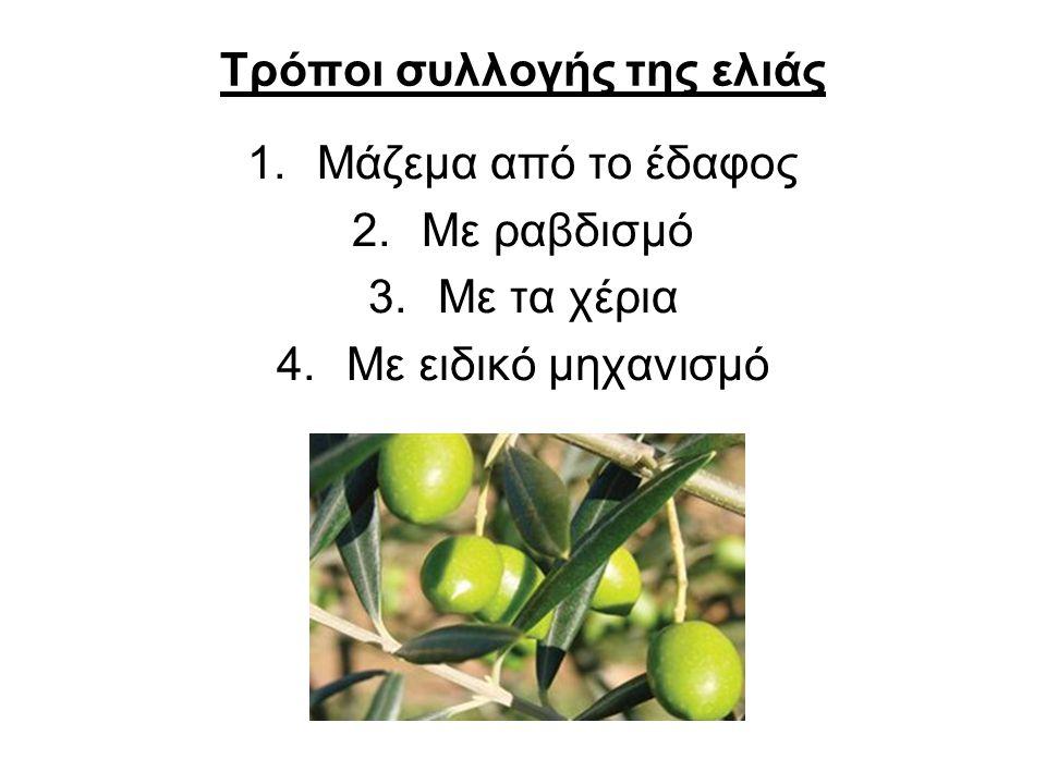 1.Μάζεμα με τα χέρια από το δέντρο Αυτή η μέθοδος συνίσταται για να έχουμε το καλύτερο σε ποιότητα λάδι.