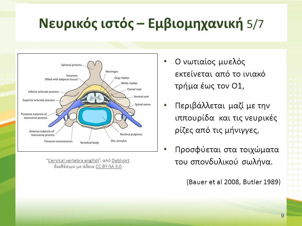 Νευρικός ιστός – Εμβιομηχανική 5/7 Ο νωτιαίος μυελός εκτείνεται από το ινιακό τρήμα έως τον Ο1, Περιβάλλεται μαζί με την ιππουρίδα και τις νευρικές ρί