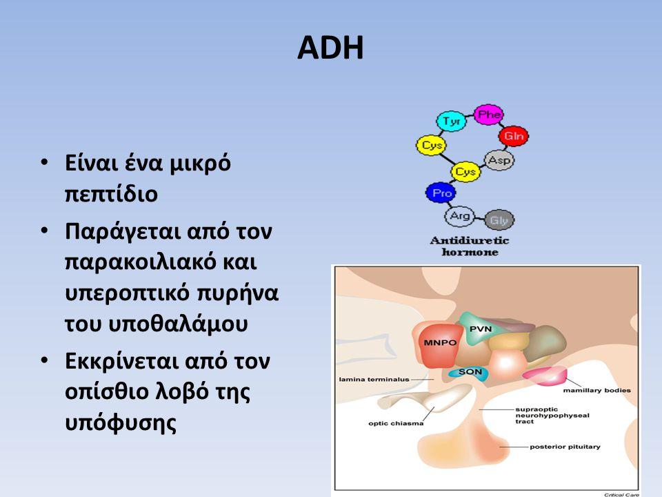 ADH Είναι ένα μικρό πεπτίδιο Παράγεται από τον παρακοιλιακό και υπεροπτικό πυρήνα του υποθαλάμου Εκκρίνεται από τον οπίσθιο λοβό της υπόφυσης