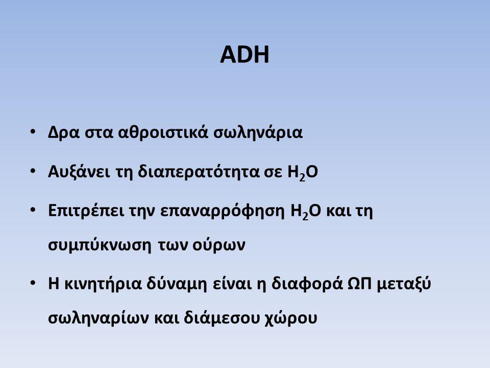 ADH Δρα στα αθροιστικά σωληνάρια Αυξάνει τη διαπερατότητα σε H 2 O Επιτρέπει την επαναρρόφηση H 2 O και τη συμπύκνωση των ούρων Η κινητήρια δύναμη είν