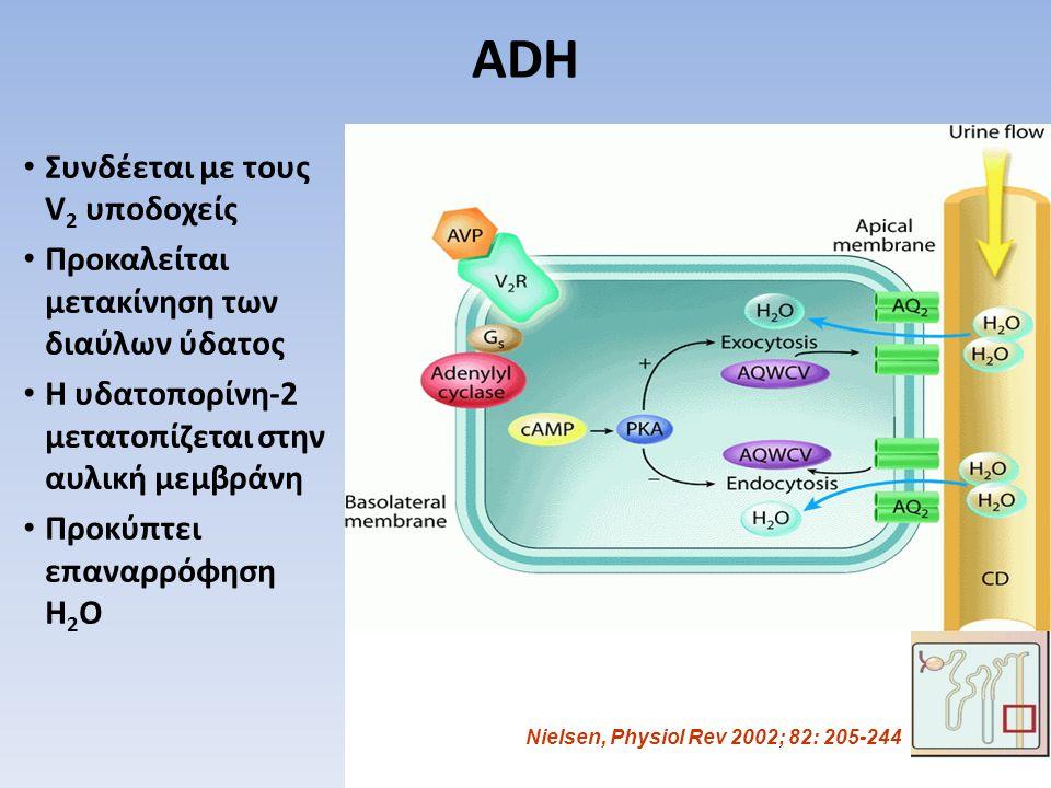 ADH Συνδέεται με τους V 2 υποδοχείς Προκαλείται μετακίνηση των διαύλων ύδατος Η υδατοπορίνη-2 μετατοπίζεται στην αυλική μεμβράνη Προκύπτει επαναρρόφησ