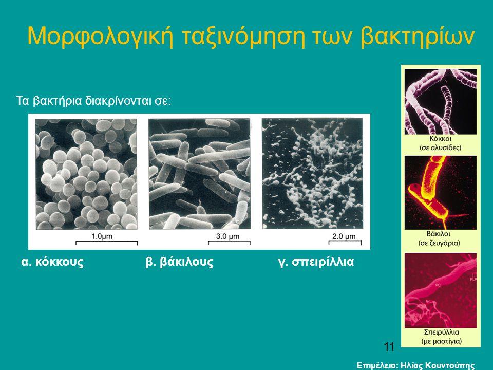 11 Μορφολογική ταξινόμηση των βακτηρίων Τα βακτήρια διακρίνονται σε: α. κόκκους β. βάκιλους γ. σπειρίλλια Επιμέλεια: Ηλίας Κουντούπης