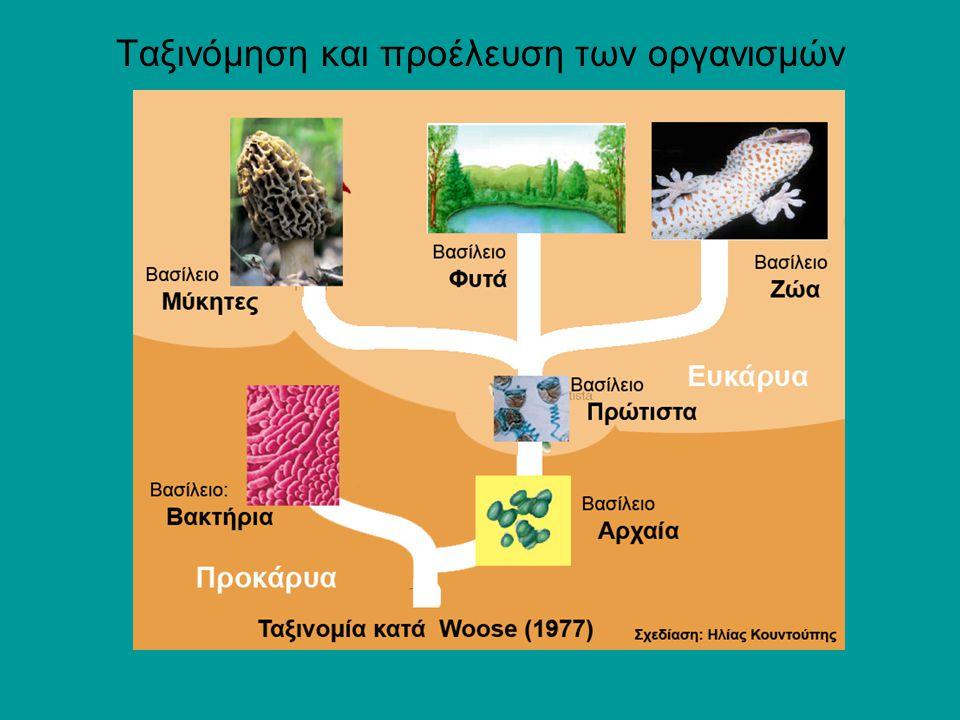 3 Ταξινόμηση των κυττάρων Τα φυτά, τα ζώα, οι μήκυτες και τα πρωτόζωα είναι ευκαρυωτικοί οργανισμοί Υπάρχουν δυο είδη κυττάρων:  τα προκαρυωτικά και  τα ευκαρυωτικά Τα βακτήρια (στα οποία περιλαμβάνονται τα αρχαία και τα Κυανοφύκη) είναι προκαρυωτικοί μονοκύτταροι οργανισμοί Προκαρυωτικά κύτταρα (Βακτήρια Ε.