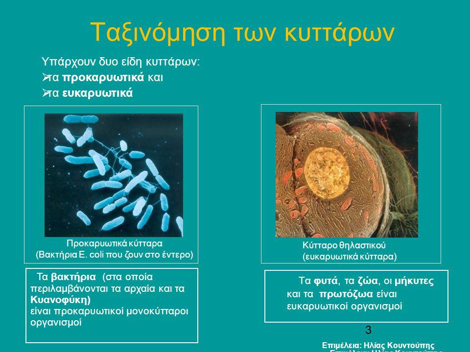 Tα βακτήρια Επιμέλεια: Ηλίας Κουντούπης