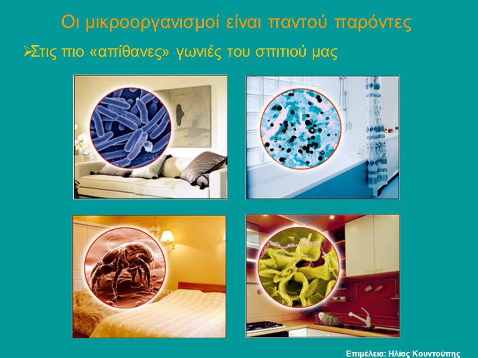 Το Vivrio cholerae προκαλεί τη χολέρα Παθογόνα βακτήρια Το βακτήριο Vibrio cholerae μεταδίδεται στον άνθρωπο από μολυσμένο νερό, γάλα ή τρόφιμο.