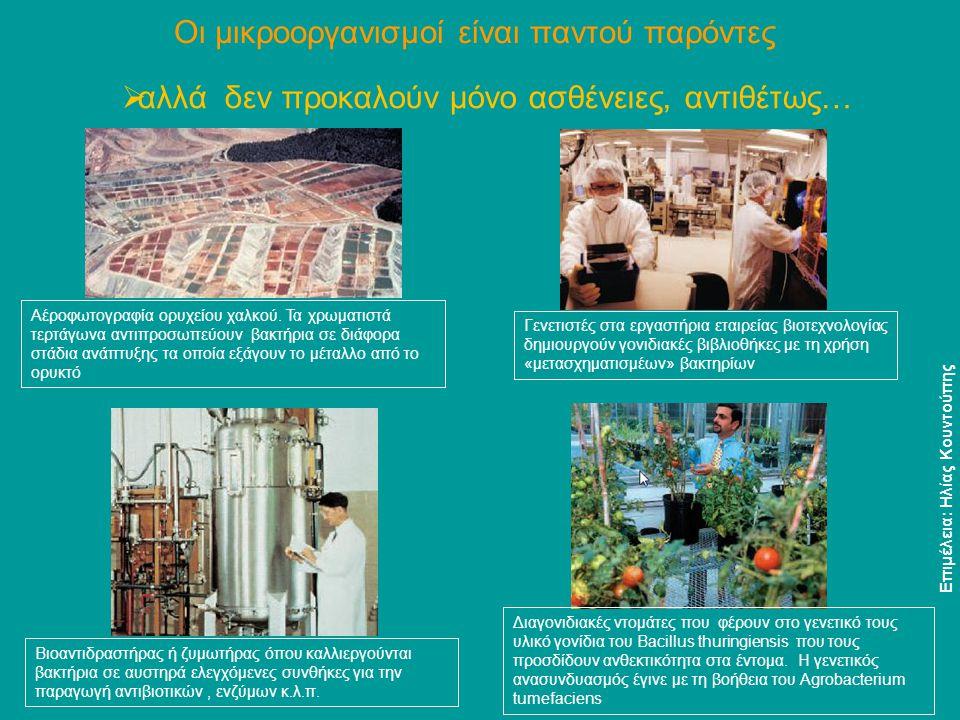 Σταφυλόκοκκοι Παθογόνα βακτήρια Επιμέλεια: Ηλίας Κουντούπης