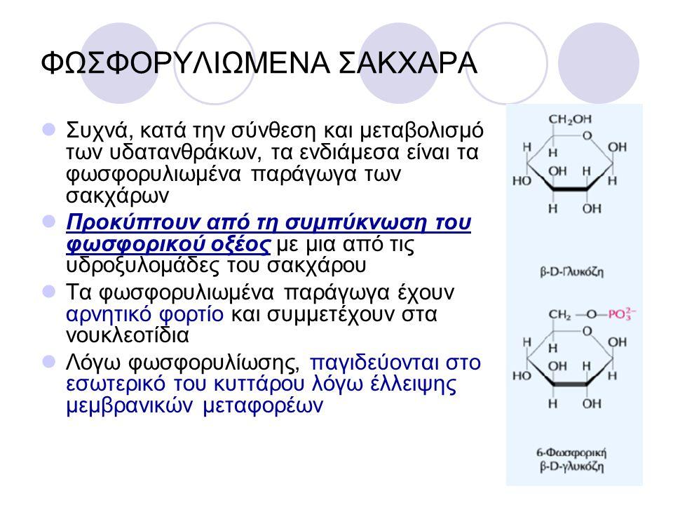 ΔΙΣΑΚΧΑΡΙΤΕΣ Οι δισακχαρίτες (μαλτόζη, λακτόζη, σακχαρόζη) αποτελούνται από δύο μονοσακχαρίτες που συνδέονται με ένα Ο- γλυκοσιδικό δεσμό Η μαλτόζη αποτελείται από δύο μόρια γλυκόζης Η λακτόζη αποτελείται από γαλακτόζη και γλυκόζη φυσιολογικά υπάρχει μόνο στο γάλα Η σακχαρόζη (κοινή ζάχαρη) αποτελείται από γλυκόζη και φρουκτόζη και σχηματίζεται μόνο στα φυτά μέσω της φωτοσύνθεσης