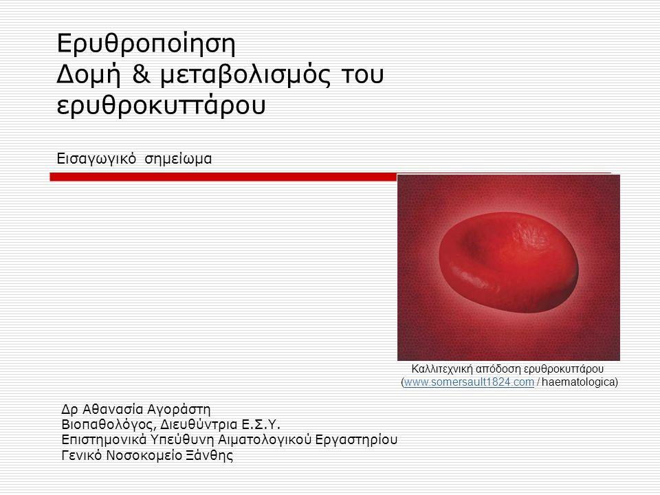 Ερυθροποίηση Δομή & μεταβολισμός του ερυθροκυττάρου Εισαγωγικό σημείωμα Δρ Αθανασία Αγοράστη Βιοπαθολόγος, Διευθύντρια Ε.Σ.Υ. Επιστημονικά Υπεύθυνη Αι