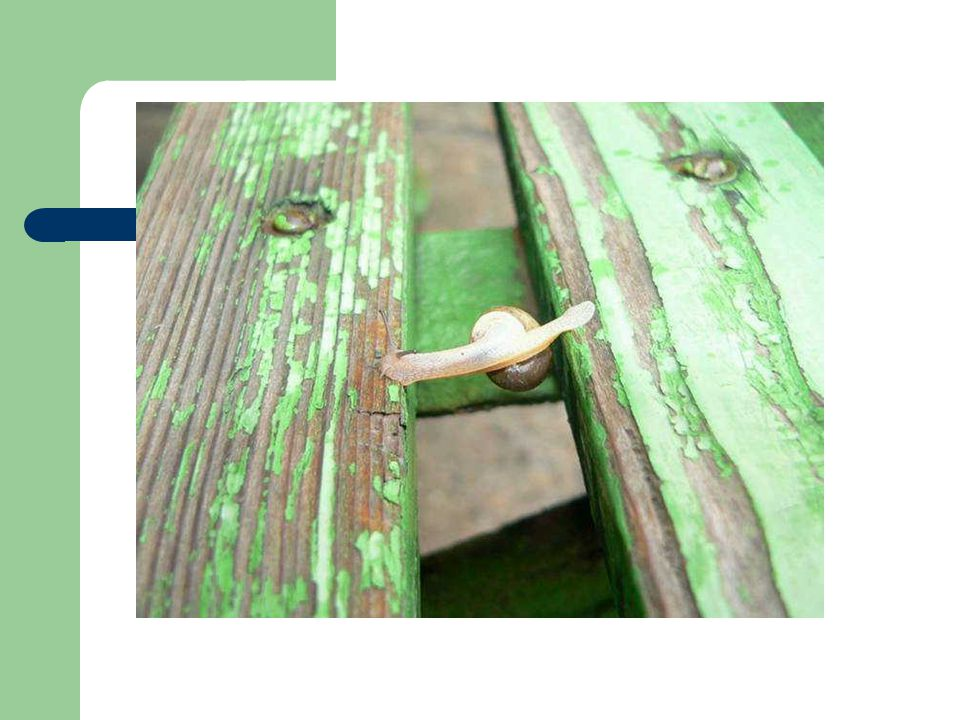 Δεν αρκεί να βρεθούν μαζί…… ΟΜΑΔΑ Κατανόηση και αποδοχή κοινών σκοπών Σαφής αλληλεξάρτηση Συνθήκες οπτικής επαφής & επικοινωνίας Αποκέντρωση διδασκαλικής εξουσίας & ανάθεση ρόλων Ίσες ευκαιρίες Συνεργατικές (και όχι ανταγωνιστικές) σχέσεις
