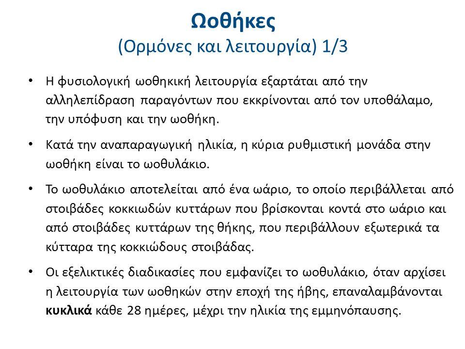 Ανατομικά στοιχεία όρχεως 1.Tunica albuginea, 2. Septula testis, 3.