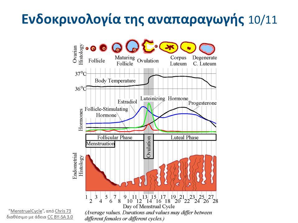 """Ενδοκρινολογία της αναπαραγωγής 10/11 """"MenstrualCycle"""", από Chris 73 διαθέσιμο με άδεια CC BY-SA 3.0MenstrualCycleChris 73CC BY-SA 3.0"""