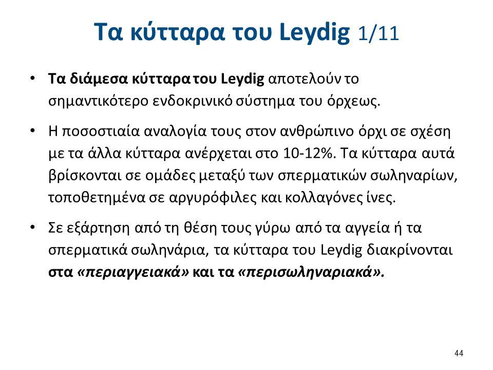 Τα κύτταρα του Leydig 1/11 Τα διάμεσα κύτταρα του Leydig αποτελούν το σημαντικότερο ενδοκρινικό σύστημα του όρχεως. Η ποσοστιαία αναλογία τους στον αν