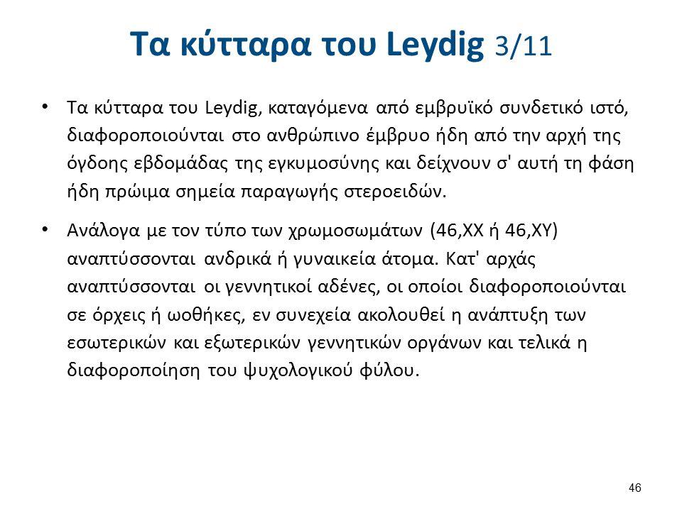 Τα κύτταρα του Leydig 3/11 Τα κύτταρα του Leydig, καταγόμενα από εμβρυϊκό συνδετικό ιστό, διαφοροποιούνται στο ανθρώπινο έμβρυο ήδη από την αρχή της ό