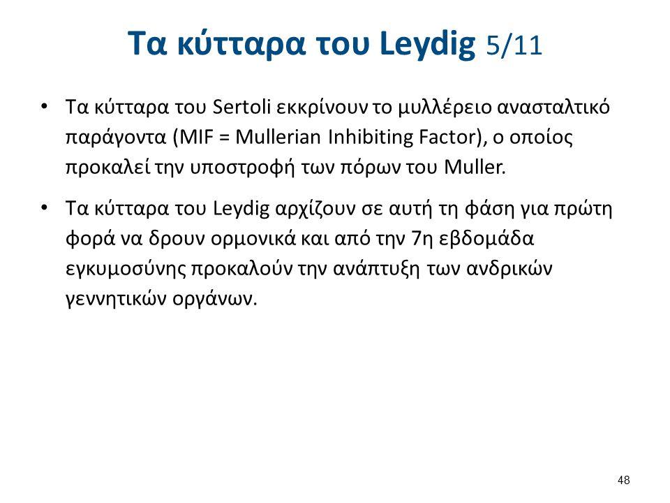 Τα κύτταρα του Leydig 5/11 Τα κύτταρα του Sertoli εκκρίνουν το μυλλέρειο ανασταλτικό παράγοντα (MIF = Mullerian Inhibiting Factor), ο οποίος προκαλεί