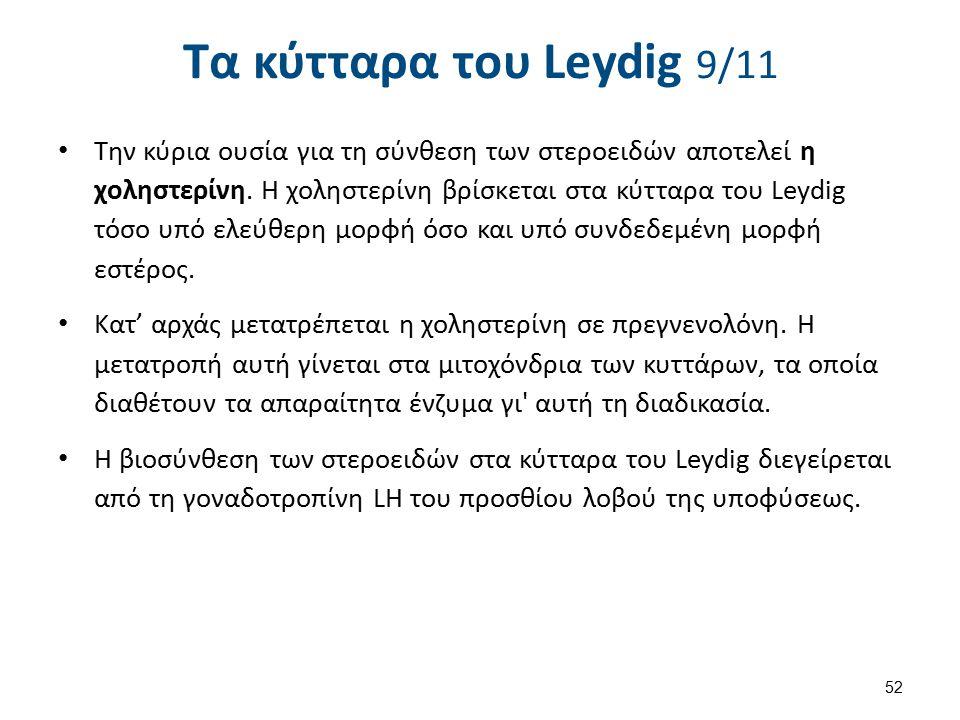 Τα κύτταρα του Leydig 9/11 Την κύρια ουσία για τη σύνθεση των στεροειδών αποτελεί η χοληστερίνη. Η χοληστερίνη βρίσκεται στα κύτταρα του Leydig τόσο υ
