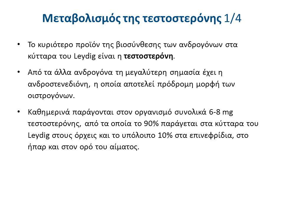 Μεταβολισμός της τεστοστερόνης 1/4 Το κυριότερο προϊόν της βιοσύνθεσης των ανδρογόνων στα κύτταρα του Leydig είναι η τεστοστερόνη. Από τα άλλα ανδρογό