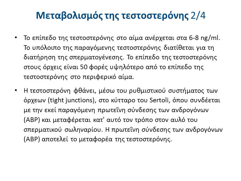 Μεταβολισμός της τεστοστερόνης 2/4 Το επίπεδο της τεστοστερόνης στο αίμα ανέρχεται στα 6-8 ng/ml. To υπόλοιπο της παραγόμενης τεστοστερόνης διατίθεται