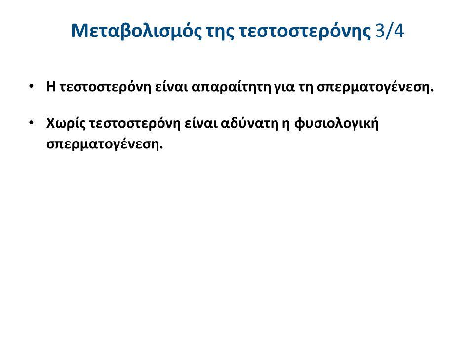 Μεταβολισμός της τεστοστερόνης 3/4 Η τεστοστερόνη είναι απαραίτητη για τη σπερματογένεση. Χωρίς τεστοστερόνη είναι αδύνατη η φυσιολογική σπερματογένεσ
